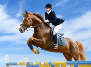 Verkoopopbrengst sportpaard niet belast