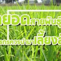 สุดยอดสายพันธุ์หญ้า  ที่ควรนำมาเป็นอาหารเลี้ยงสัตว์