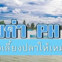 เทคนิคง่ายๆ ในการปรับค่า Ph ของน้ำในบ่อเลี้ยงปลา
