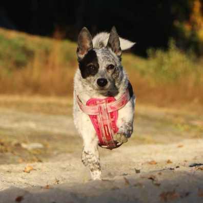Cattel-dog-mix-Hundefotografie-schweiz-gallery-2