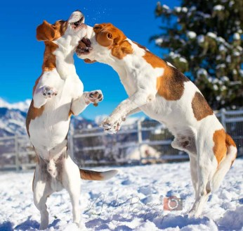 Hundefotografie Wallis