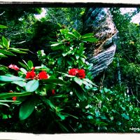 Wild Pacific Trail cove