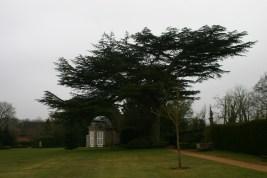 Summer House and Cedar