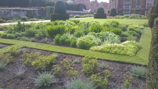 rose borders with Nepeta