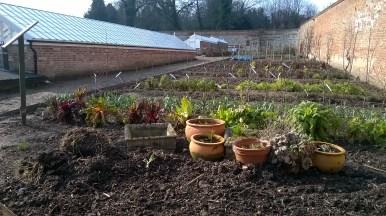 Some of last year's kitchen garden border still looking interesting..