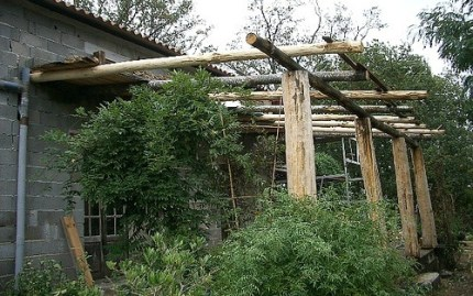 trellis-for-climbing-plants
