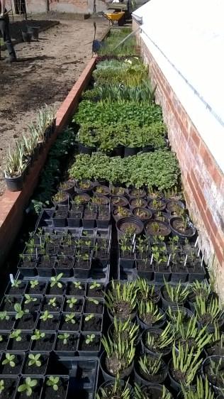 ...rady to go- cut flower plants..