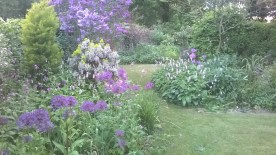 alliums and lilac combining well....