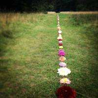 PicPost: Flower Power