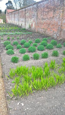 cut flower borders looking promising.