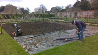 Roses gone and another area for food growing...