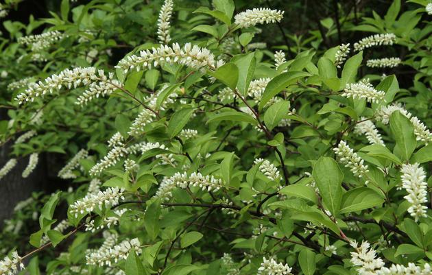 Plants Nc Mountains