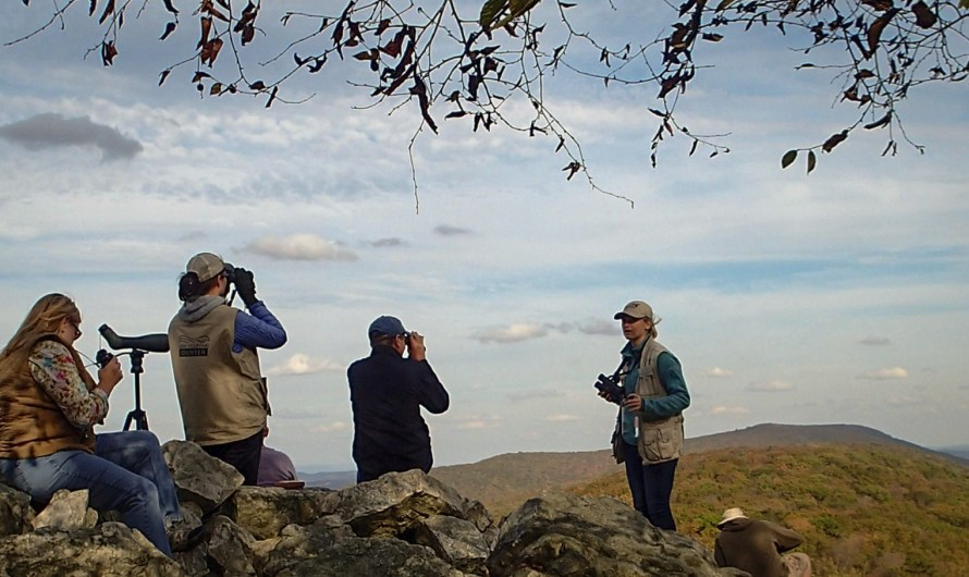 Hawk Mountain soars in conservation of birds