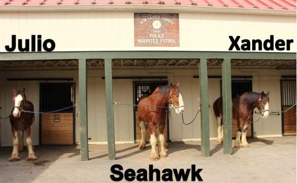 new-horses_mpu