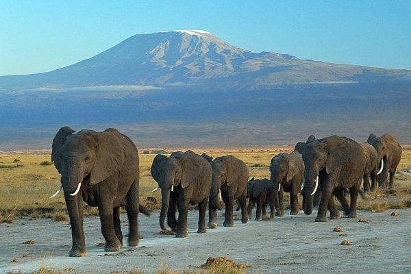 Amboseli_national_park_against_Mount_Kilimanjaroアンボセリ国立公園