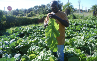 Calvin Bryant: A brilliant businessman is master gardener