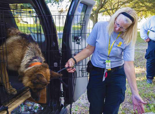 How Hurricane Irma affected pets and their owners