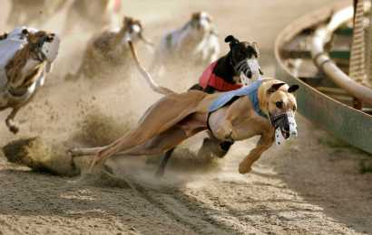 Have gambling and greyhounds run their course? A potential amendment to the Florida constitution