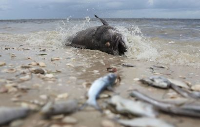 Red Tide Causes Food Insecurity in Sarasota