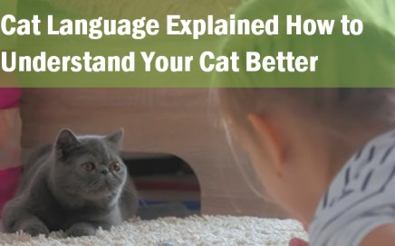 cat language explained_how_to_understand_your_cat_better_jaw dropping facts
