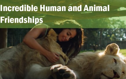 incredible human and animal friendships_real wild