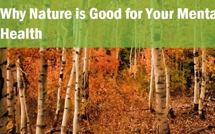 why nature is good for your mental health_neuro transmissions