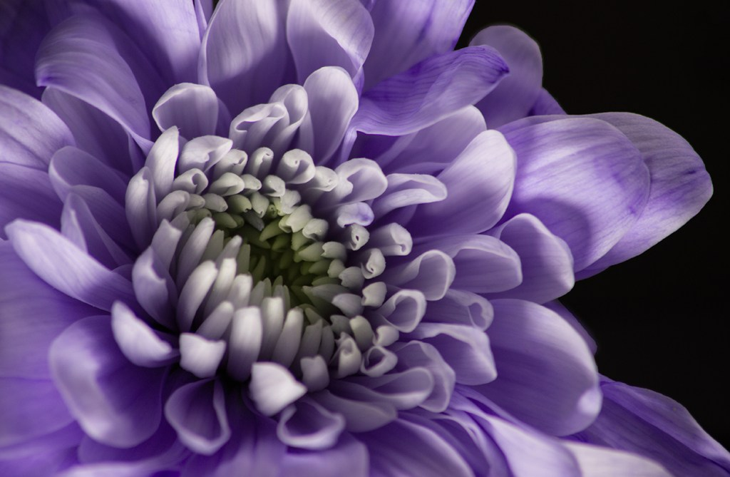 Strokes of Violet - Katy McGuiness - SILVER Open