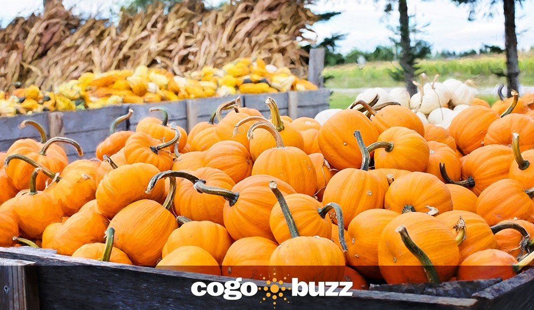 """Foodable: """"Fall Flavors That Are Sure To Keep Guests Engaged Through The Winter"""""""
