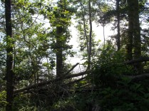 trail 4