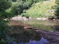 Pea Creek Landscape 1