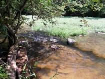 Pea Creek Landscape 4