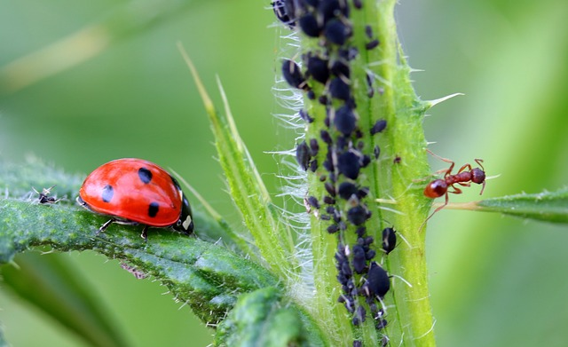 Dealing With Pests: Tips And Tricks