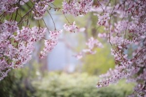 The Best Horticulture Tips For Any Home
