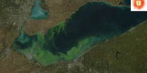 Do Now U! Should the US Government Restrict Fertilizer Use to Improve Water Quality?