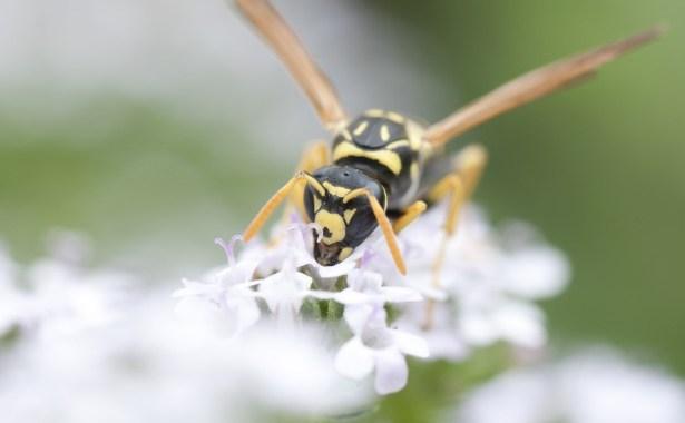 ape-che-tiene-un-fiore