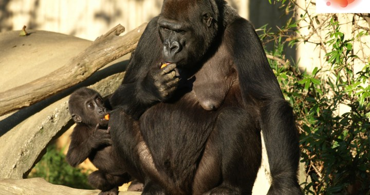 Is It Morally Justifiable to Kill An Endangered Animal If A Human Life Is At Risk? Photo Credit: US Department of State IIP P