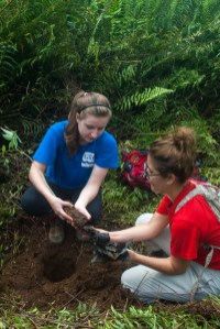 rainforest ecology 2015-1