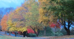 'Early Fall Morning' by Anita Adams of NC Trees Photography