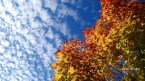 autumn-leaves-october-signed