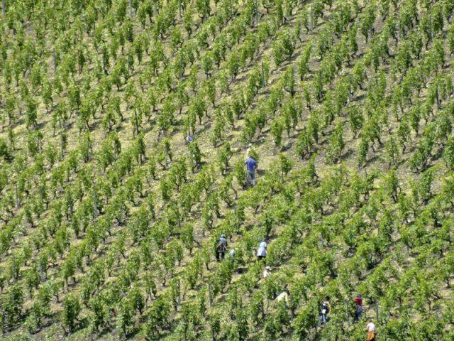 Vinho do Porto: 12 curiosidades que vai gostar de conhecer