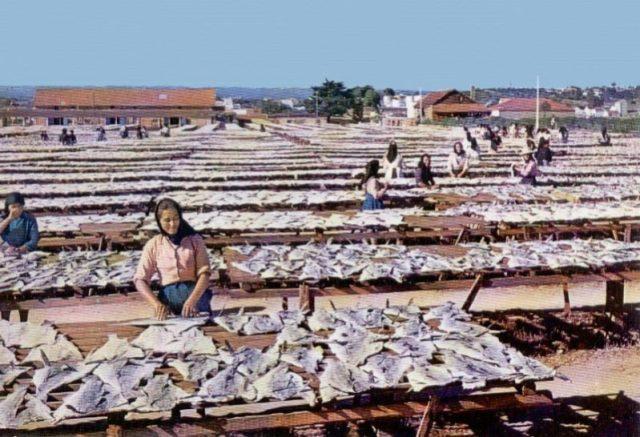 A história do negócio do bacalhau