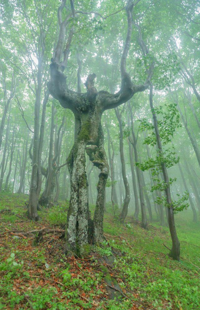 30 árvores insólitas que parecem outras coisas