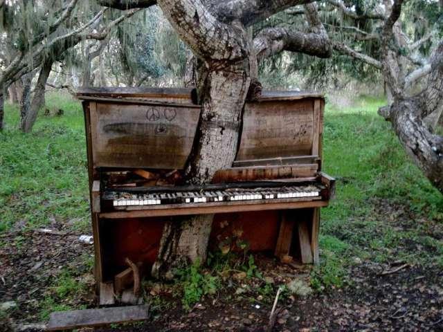 Lugares abandonados engolidos pela natureza
