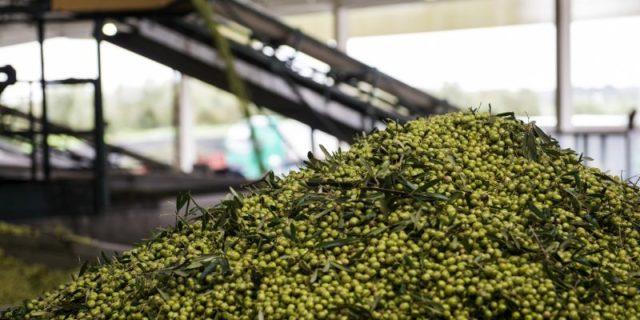 O melhor azeite do mundo é português e é do Alentejo