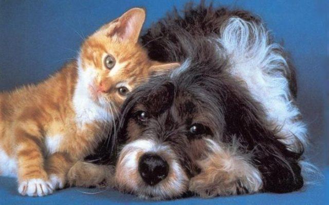 Sobre cães e gatos, de Ricardo Araújo Pereira