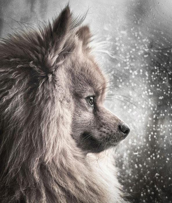 Portuguesa entre os melhores fotógrafos de cães em 2018