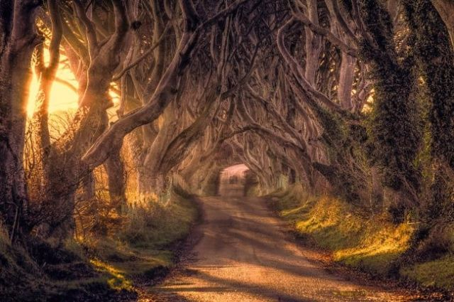 Dark Hedges, Reino Unido