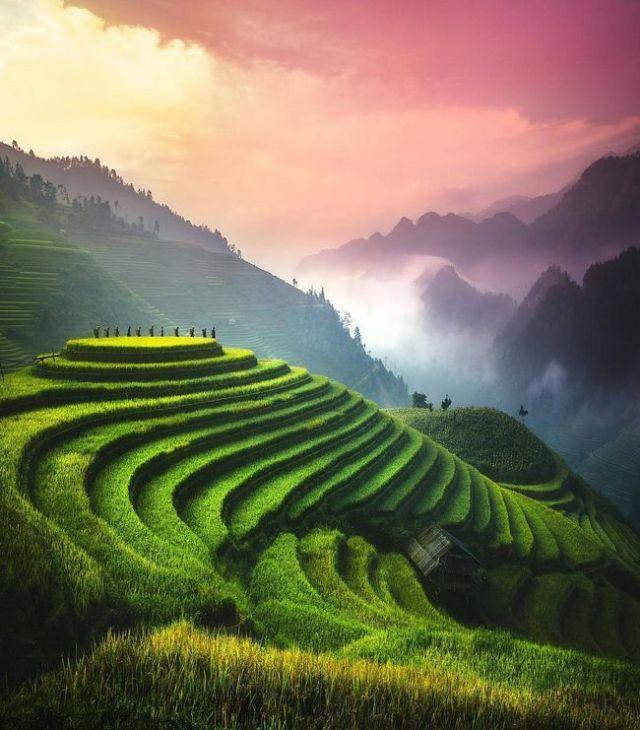 Terraços de arroz, Vietnam