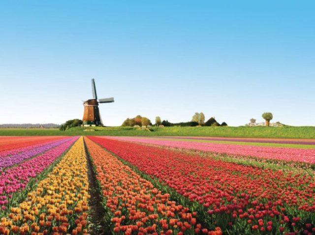 Campos de Tulipas, Holanda