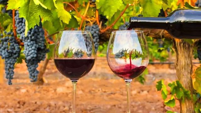 vinhos tintos do Douro